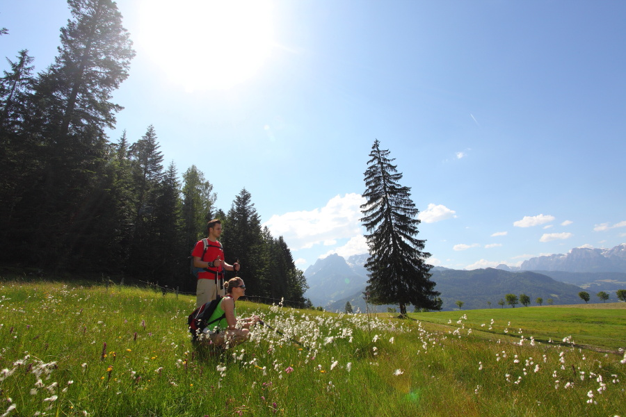 Wandern Blumenwiese_21